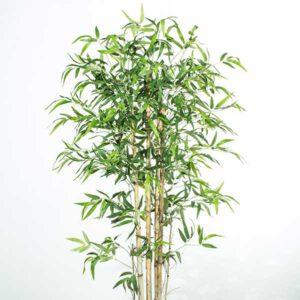 עץ במבוק גזע טבעי 180