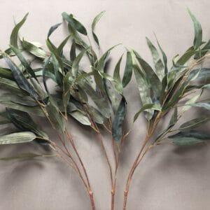 ענף ערבה איכותי