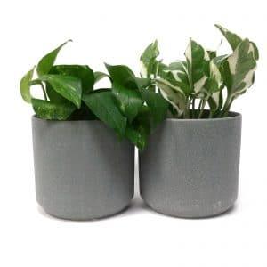 זוג עציצים ירוק   SONORA COPPIA