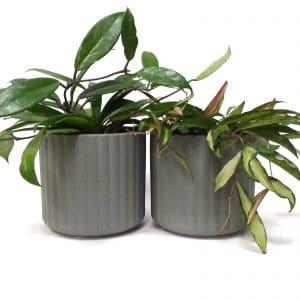 זוג עציצים ירוק   SONORA ONDA