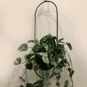 בית עציץ שחור | PIRZUL